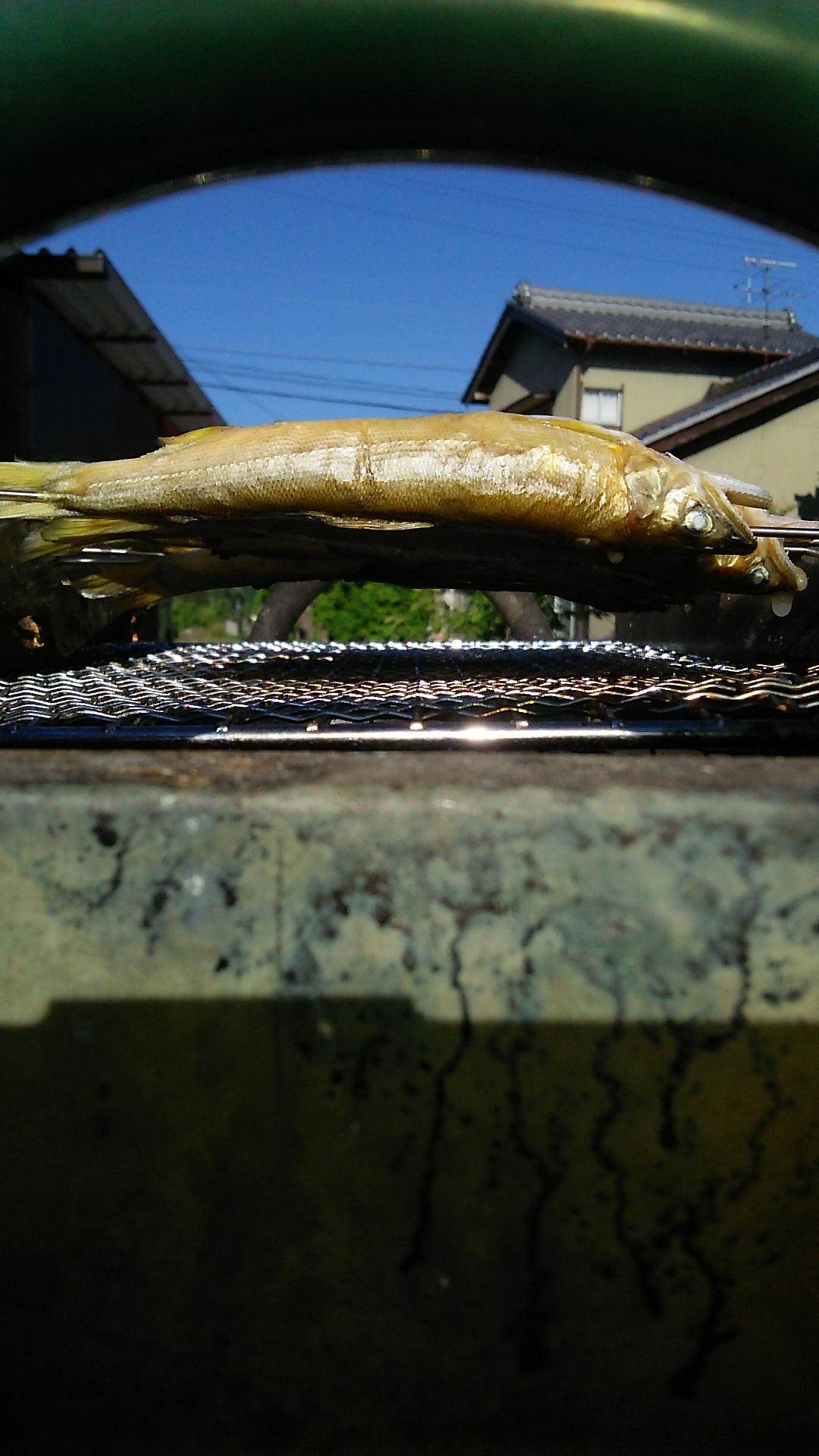 鮎の素焼き2